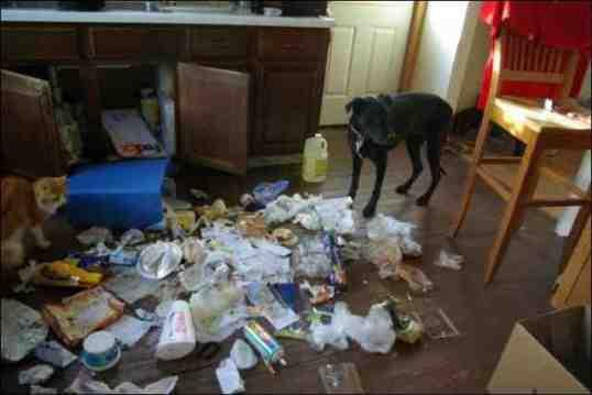 pets mess